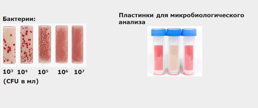 12-1 Zubora Микроорганизмы