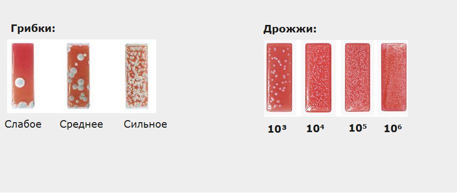 13-1 Zubora Микроорганизмы