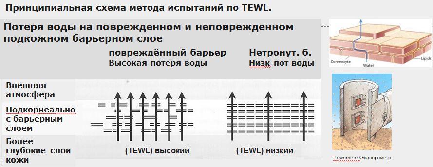 20 Zubora Принципиальная схема метода испытаний по TEWL